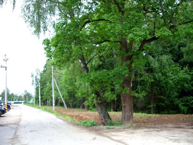 Лесной участок в Буньково
